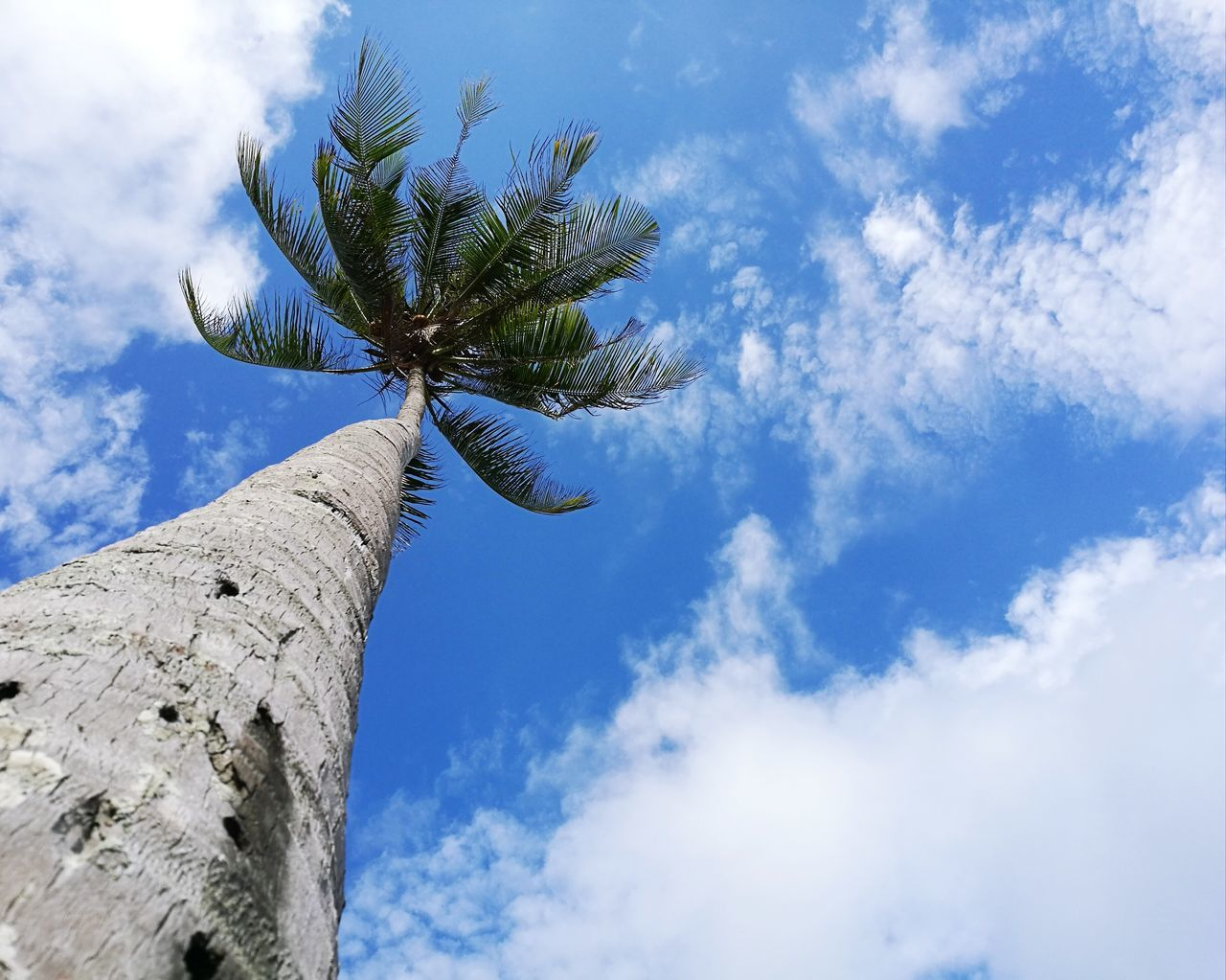 low angle view, sky, cloud - sky, tree, day, palm tree, outdoors, nature, tree trunk, no people, blue, growth, beauty in nature, architecture, ancient civilization
