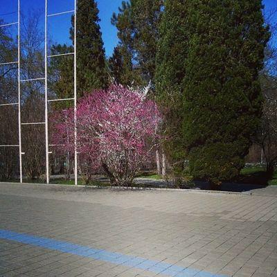 А у нас-весна!