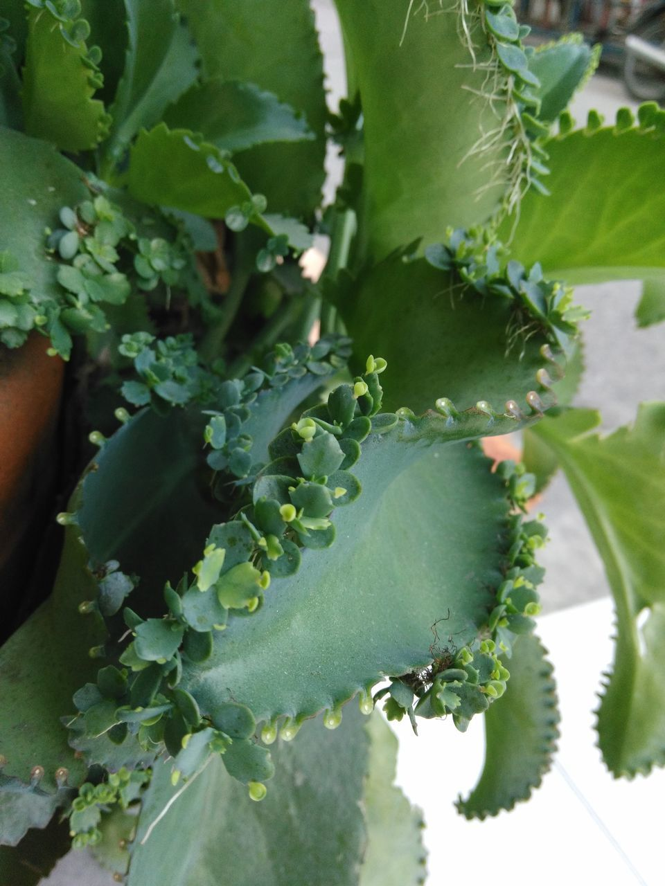 growth, green color, leaf, plant, nature, no people, day, outdoors, close-up, beauty in nature, freshness, food, fragility