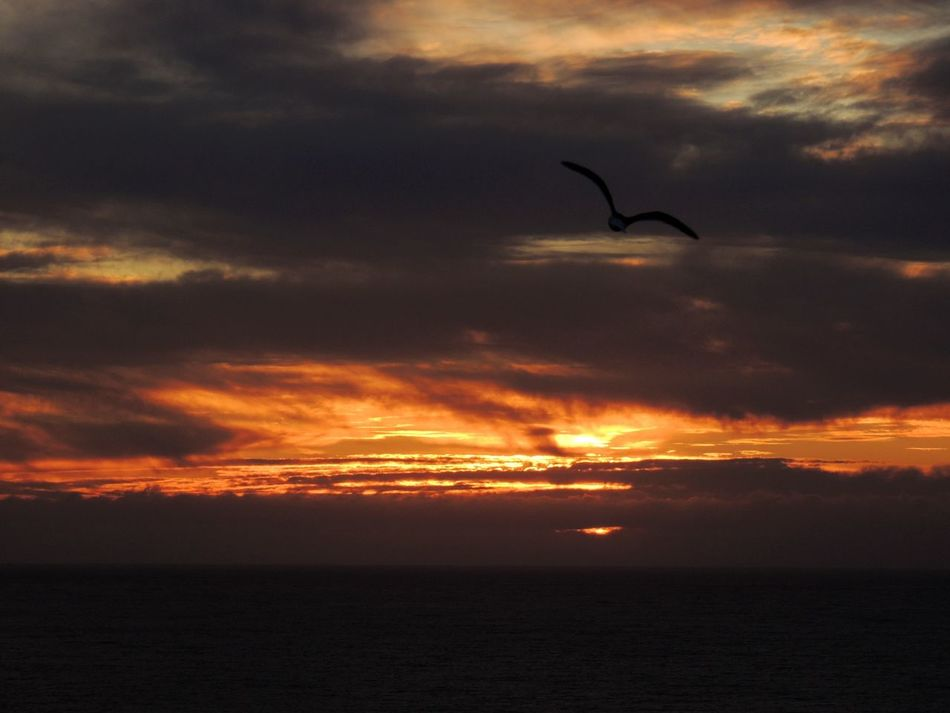 Wow Shot Dramatic Sky Bird In Flight Sunset Fire  Capture The Moment Cloudsporn Skylovers EyeEm Best Shots The Purist (no Edit, No Filter) Eye Em Nature Lover EyeEm Sunset Sea And Clouds Sea And Sky How Do You See Climate Change? Dark Clouds Darkness And Light Reñaca Beach , Chile My Best Sunsets 2015 My Favorites Sunsets