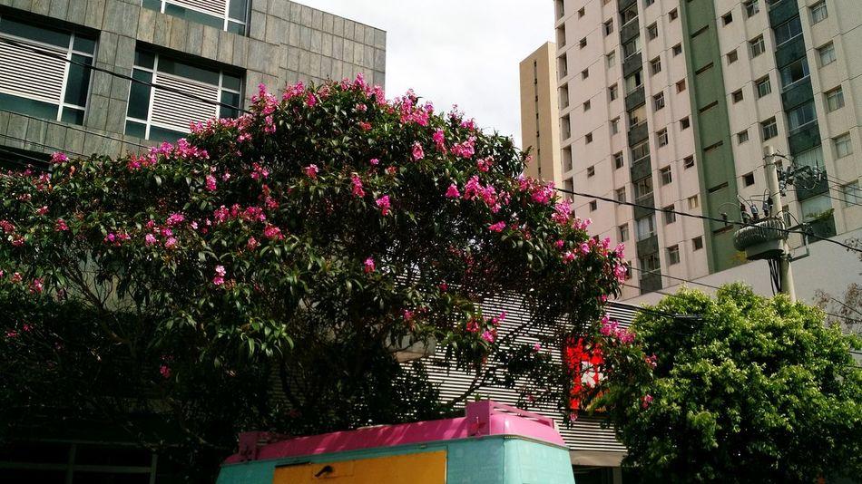 Combinou! City Flower Tree Pink Color Day City Life Brazil Clouds And Sky Belohorizontecity Belohorizonte