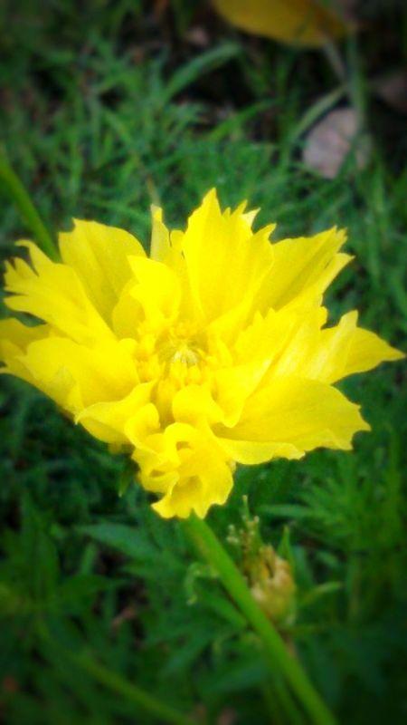 Flower, flowersporn , flower _ nature_collection, Open Edit In Eyeem. Taking Photos. .