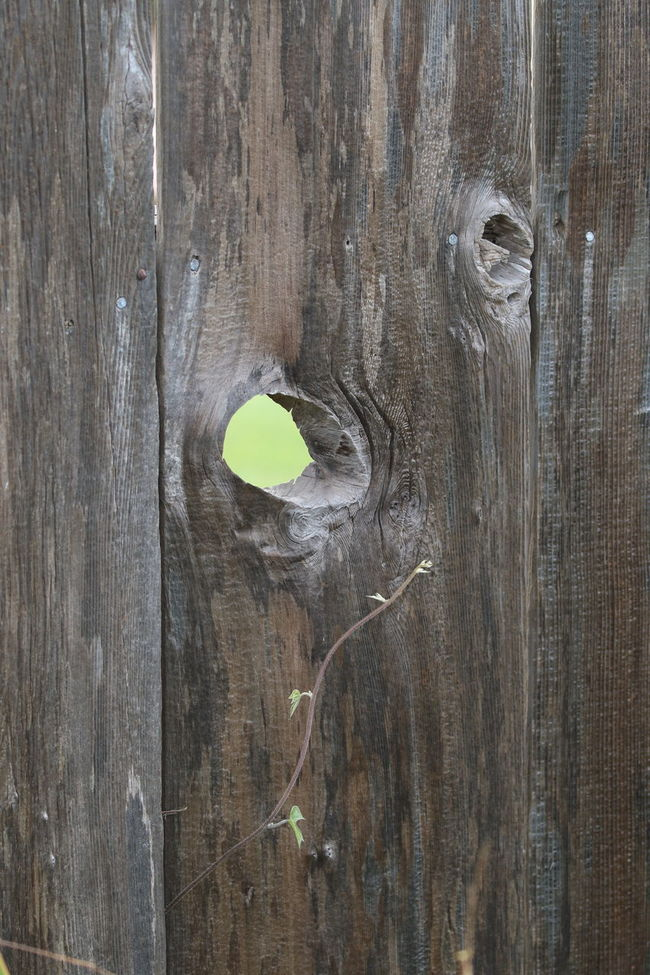 Close-up Extreme Close-up Full Frame Hole In The Fence Neighborhood No People Plank Protection Separation Spy Hole Textured  Wood - Material Wooden
