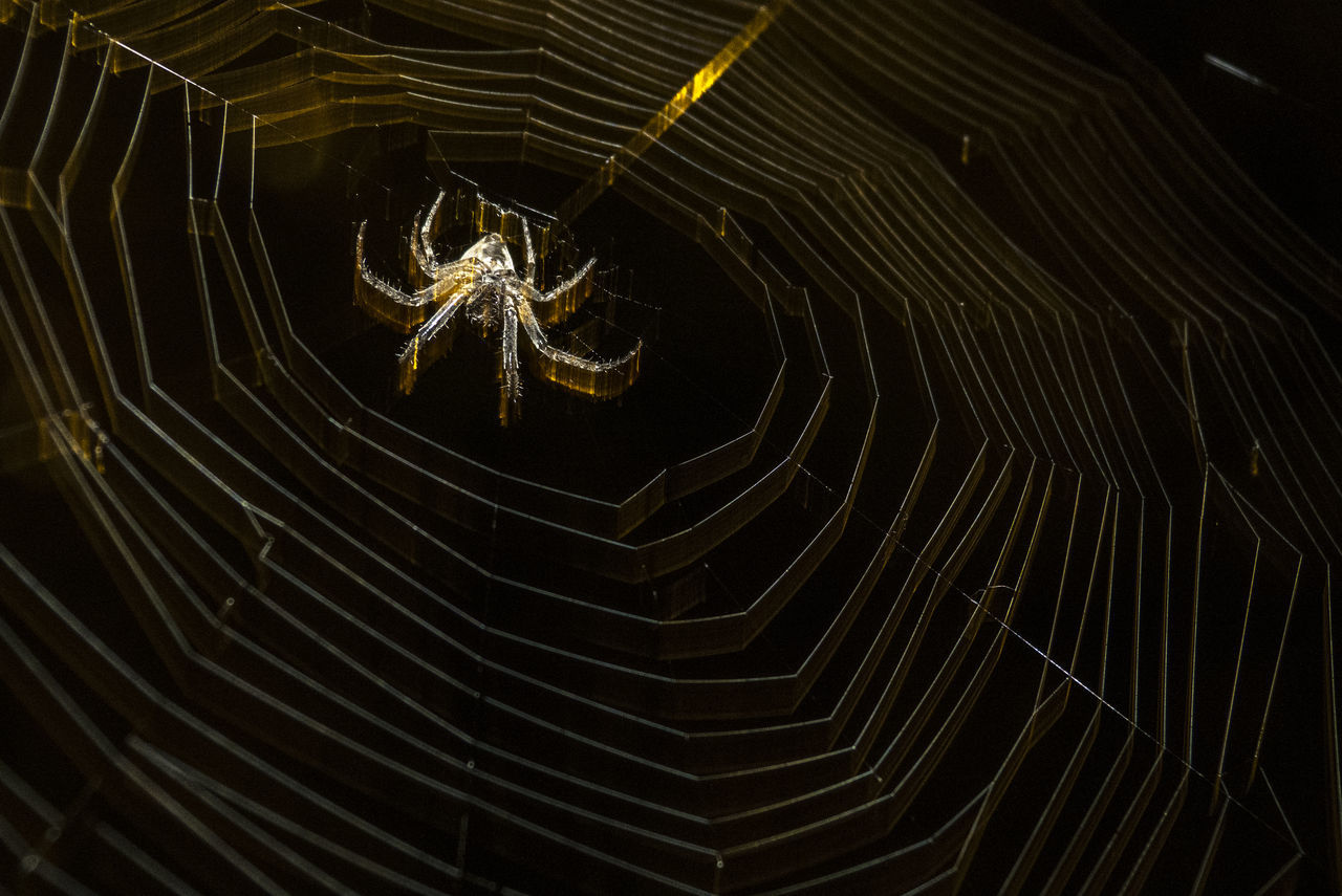 Beauty In Nature Fragility Natural Pattern Night Spider Spider Spider Web Watch Out! Wildlife