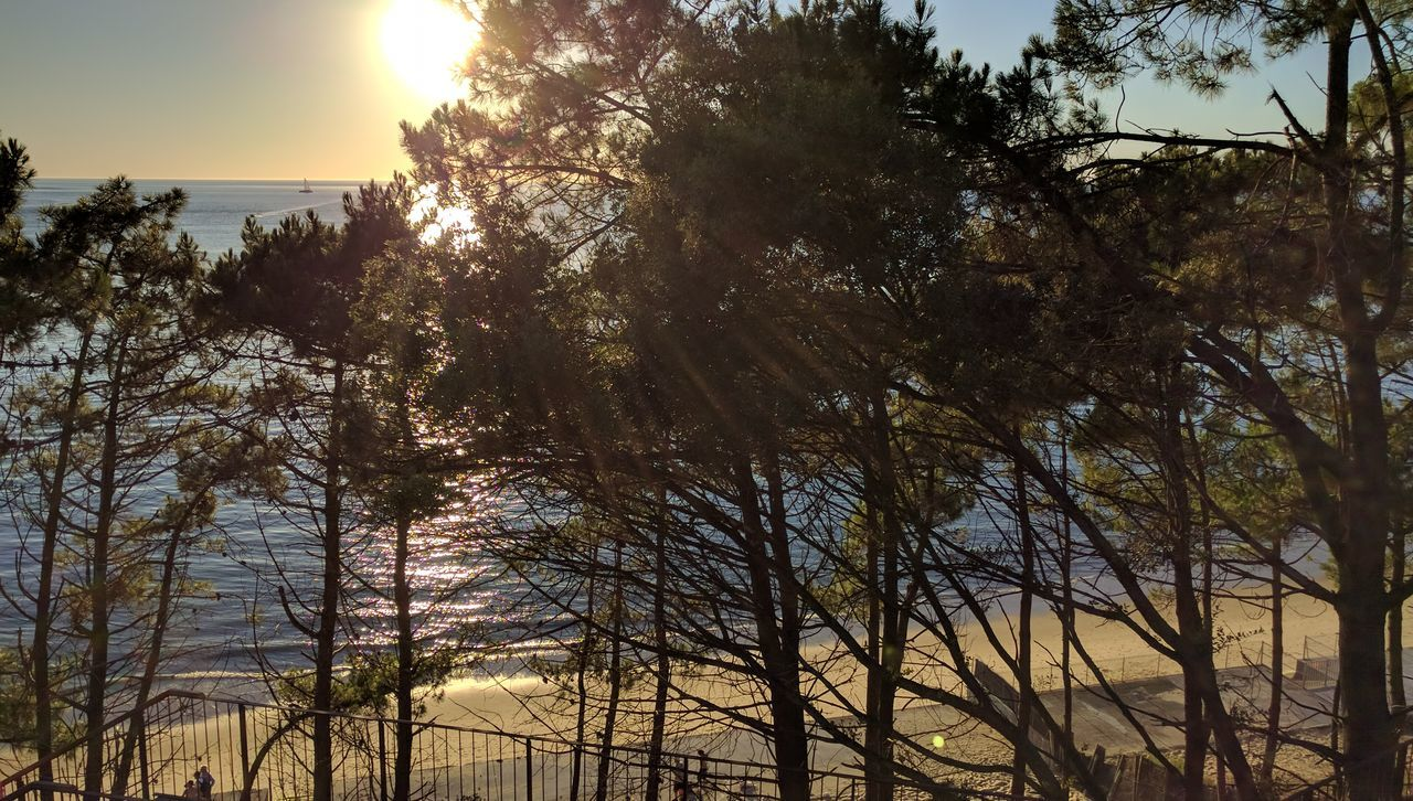 Sun Sunset Beach Trees Sunlight Nature Sky Outdoors Sunbeam Arcachon Pyla Dune Du Pyla Pine Pine Tree Travel France Beauty In Nature Point Of View Orange Color Tranquility