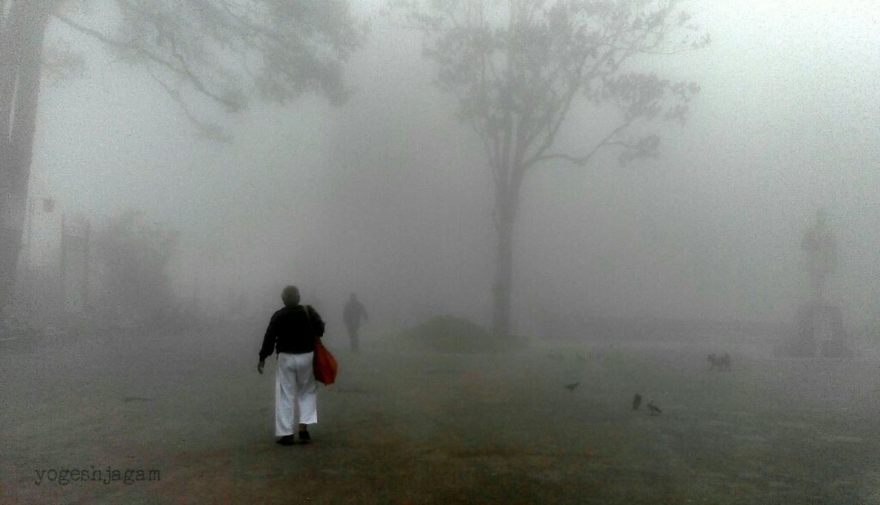 fog, foggy, mist, hazy, weather, rear view, real people, walking, landscape, tree, nature, men, outdoors, one person, day, full length, women, beauty in nature, people