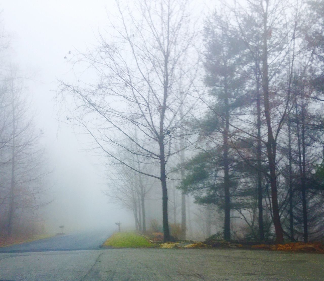 tree, nature, fog, tranquility, grass, bare tree, tranquil scene, autumn, landscape, outdoors, beauty in nature, day, scenics, no people, branch, sky