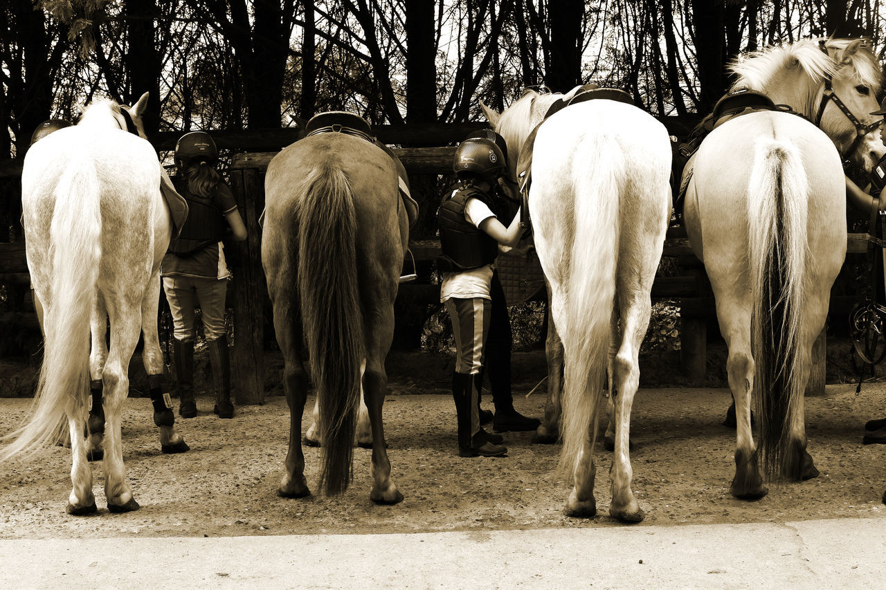 Rear View Of Horses In Stable