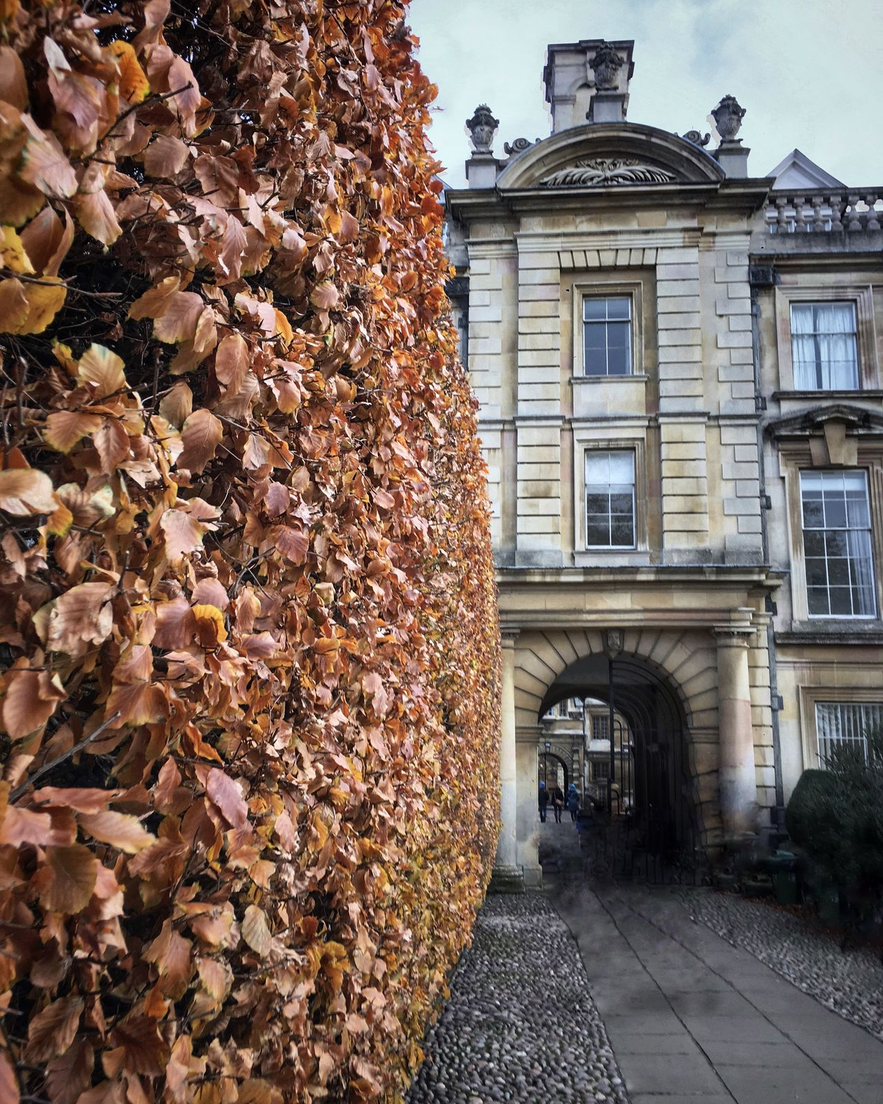 Architecture Built Structure Building Exterior No People Outdoors Residential Building Autumn Day Ivy City Tree Nature Sky Leaves Cambridge Cambridgeshire Cambridge University