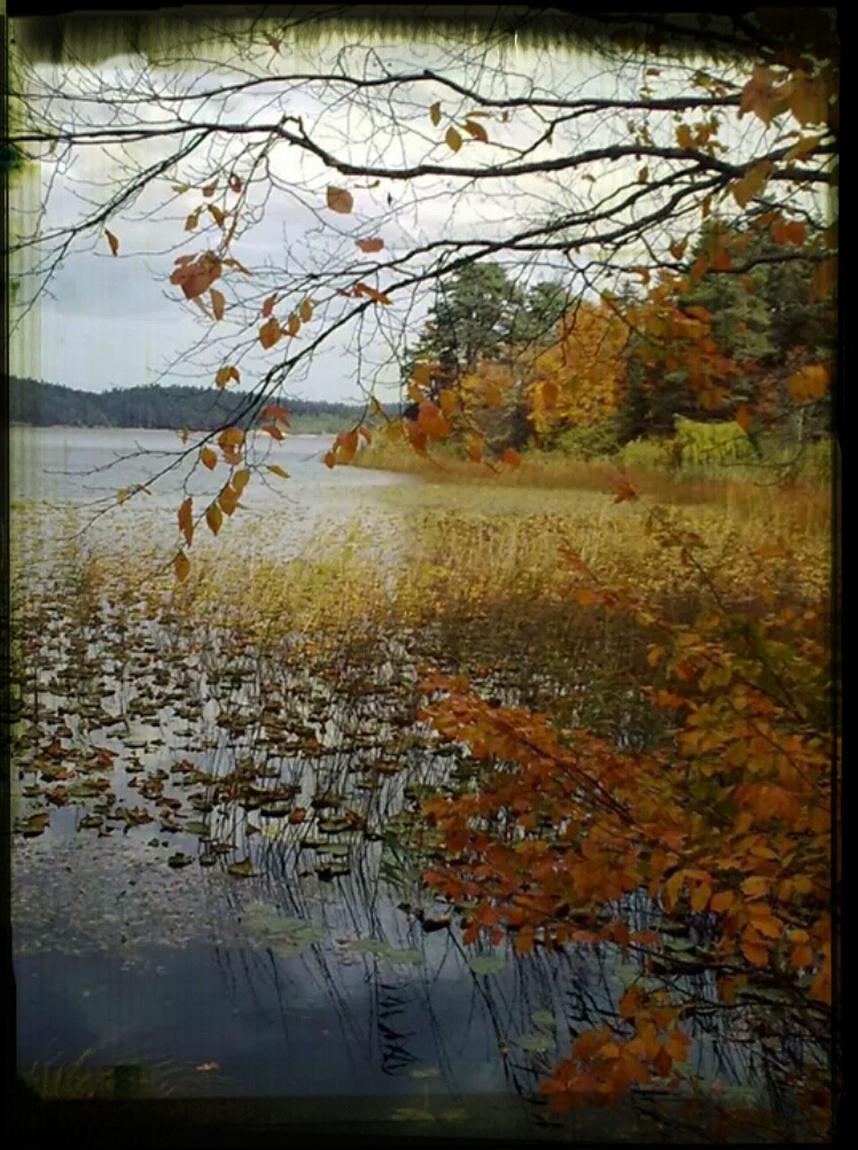 transfer print, water, auto post production filter, tree, lake, autumn, tranquility, branch, reflection, tranquil scene, bare tree, nature, scenics, beauty in nature, change, waterfront, sky, season, river, outdoors