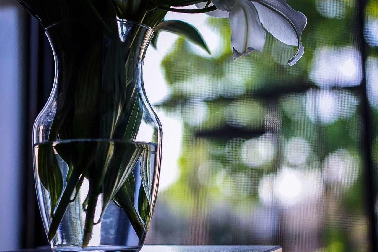 Indoors  Flowers Vase Vase Of Flowers Stargazer Lily Glass Window Background Bokeh StillLifePhotography Leaves Stem