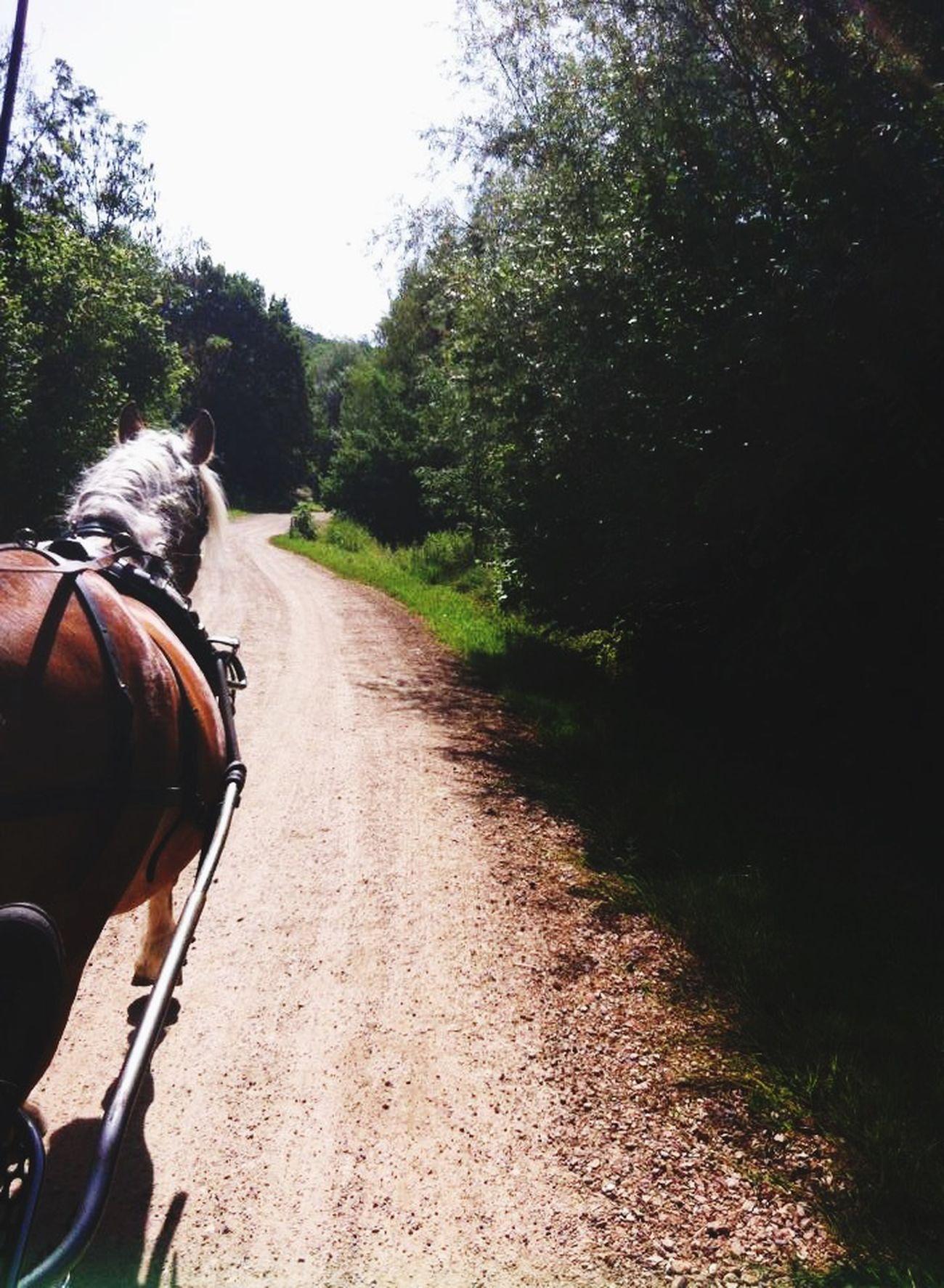 Forever different ;) Mitsuki Kiyomi Horse Horse Riding