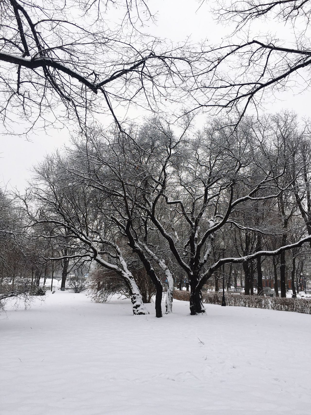 Cold Temperature Tree Snow Winter Bare Tree Weather Nature Branch Tranquility No People Outdoors Beauty In Nature Scenics Tranquil Scene Day Sky Snowing Moscow Russian Winter Gorky Park Weather