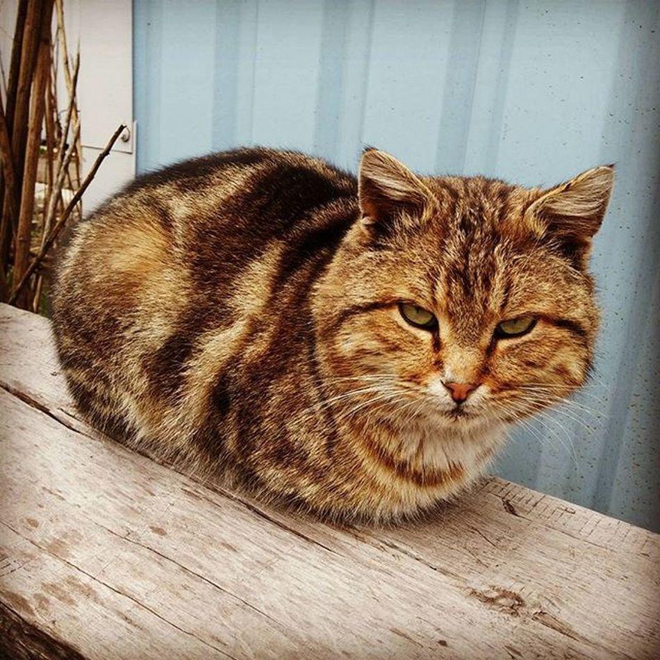 котэ уличное Cat Cats Streetcat мимишность