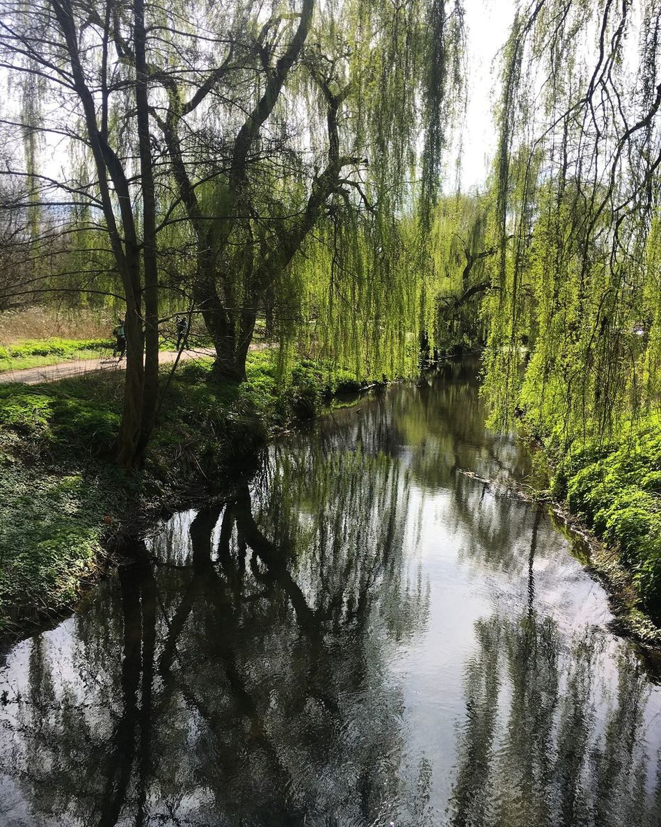 Spring March Day Outdoors Tranquility Branch Beauty In Nature No People Nature Tree River Water Reflection