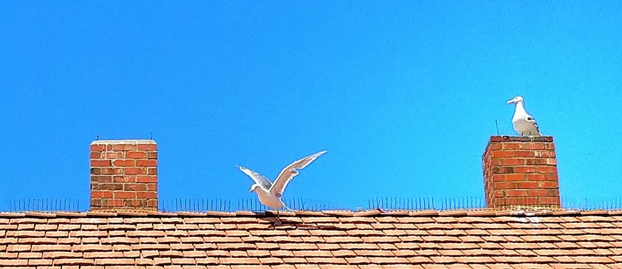 Showcase July SEAGULL IN FLIGHT Seagull Serenity Seagull Rooftop View  Roof Top Pattern, Texture, Shape And Form Sky_collection The Week On EyeEem Mukilteo Beach 43 Golden Moments Washington State Hidden Gems  Eyeemphoto Best Of EyeEm Two Is Better Than One Color Palette Colour Of Life EyeEm Gallery Lighthouse_captures Textures And Surfaces