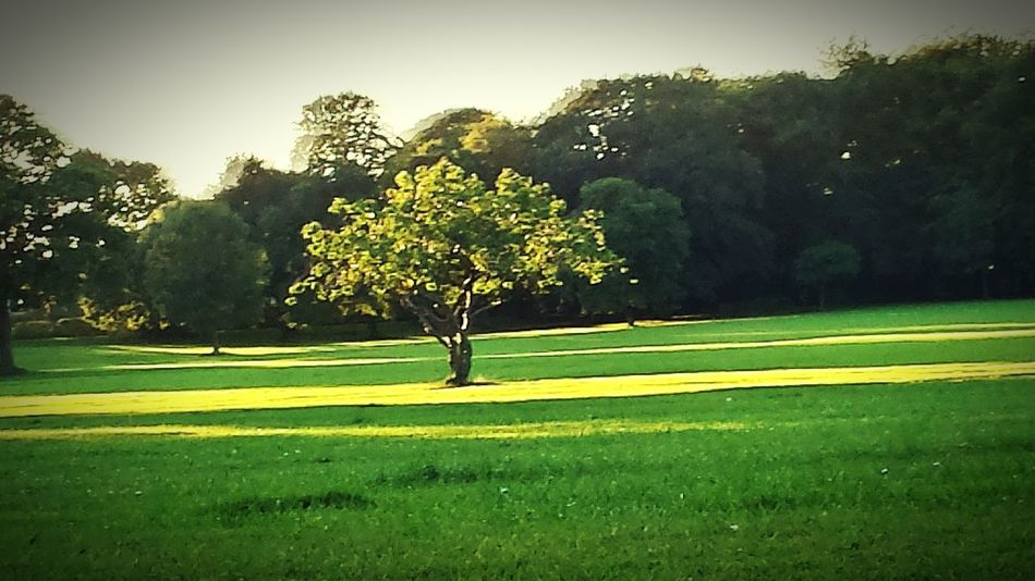 Stand Out From The Crowd TreePorn Natures Finest Beautiful Sunlight, Shades And Shadows Shadows & Lights Enjoying The Sun