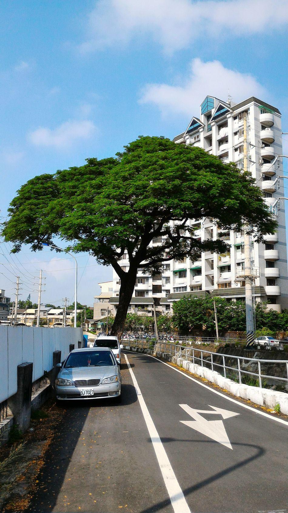 橫在馬路上的大樹 Tree Bulesky Sky And Clouds On The Road Street Photography Pingtung City Taiwan
