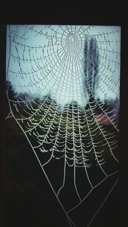 I found some frozen spider webs on my morning walk and thought they were neat looking. KimberlyJTilley