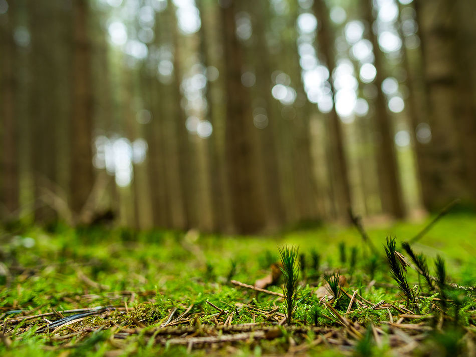 Beauty In Nature Close-up Day Forest Grass Green Color Growth Nature No People Outdoors Tree Tree Trunk WoodLand EyeEm Nature Lover EyeEm Best Shots Flora Freshness Landscape Plant Focus On Foreground Life In Colors Forest Photography Forest Trees Amazing Saturday