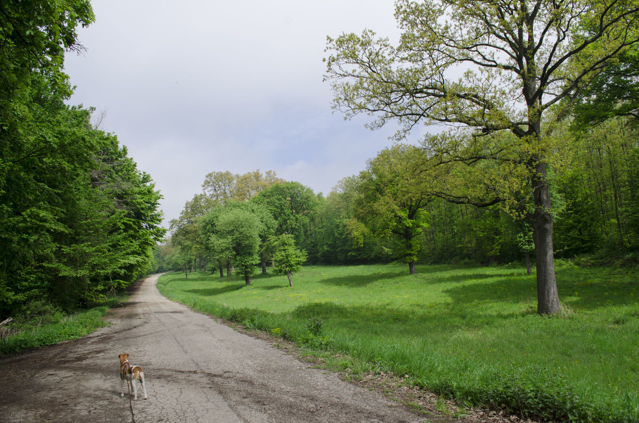 tree, nature, road, grass, one animal, growth, animal themes, tranquility, day, transportation, outdoors, green color, dog, the way forward, tranquil scene, mammal, scenics, beauty in nature, domestic animals, landscape, no people, sky