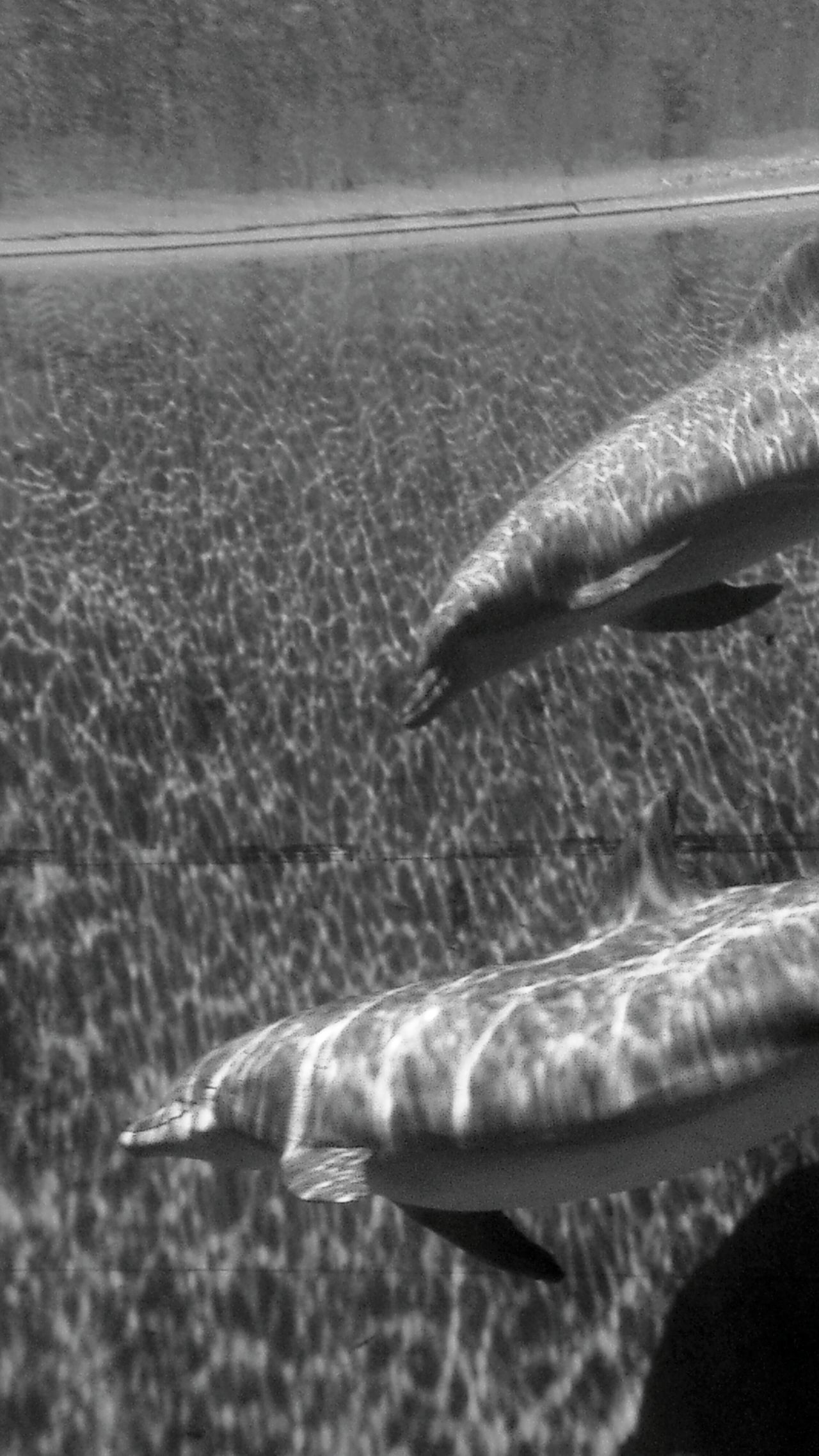 Shades Of Grey Summer Views Dolphines Precious Moments Of Life Genova Aquarium Serenity EyeEm Animal Lover EyeEm Gallery Eyeem Photography