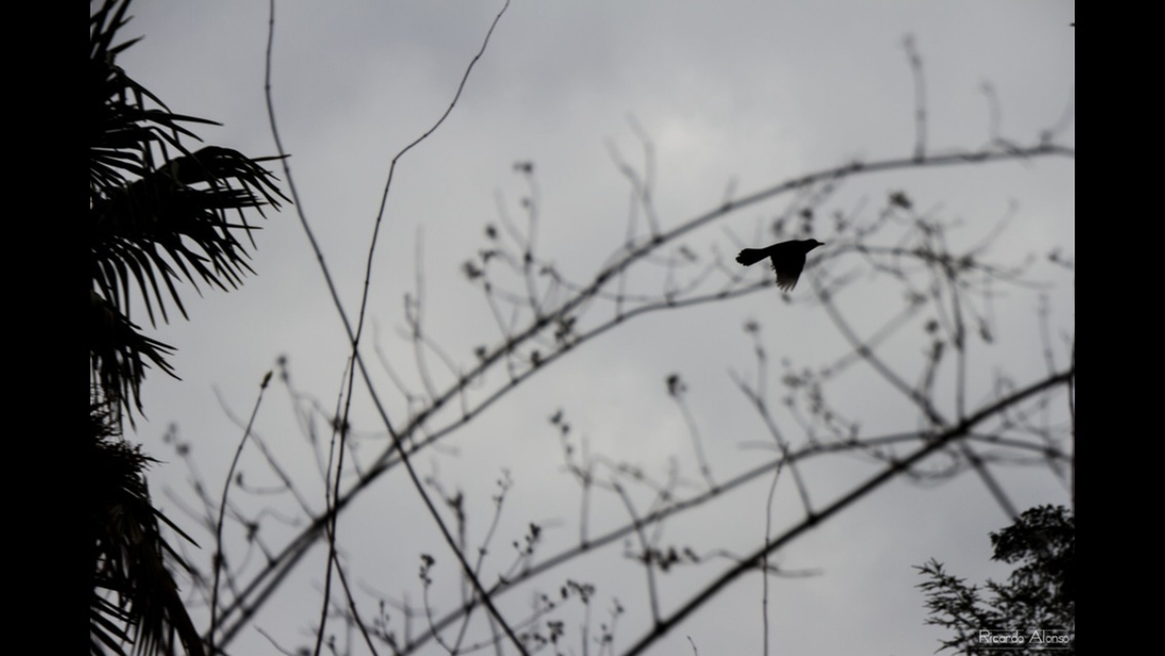 animal themes, animals in the wild, one animal, bird, wildlife, low angle view, silhouette, perching, flying, tree, sky, branch, nature, two animals, outdoors, selective focus, focus on foreground, day, no people, beauty in nature