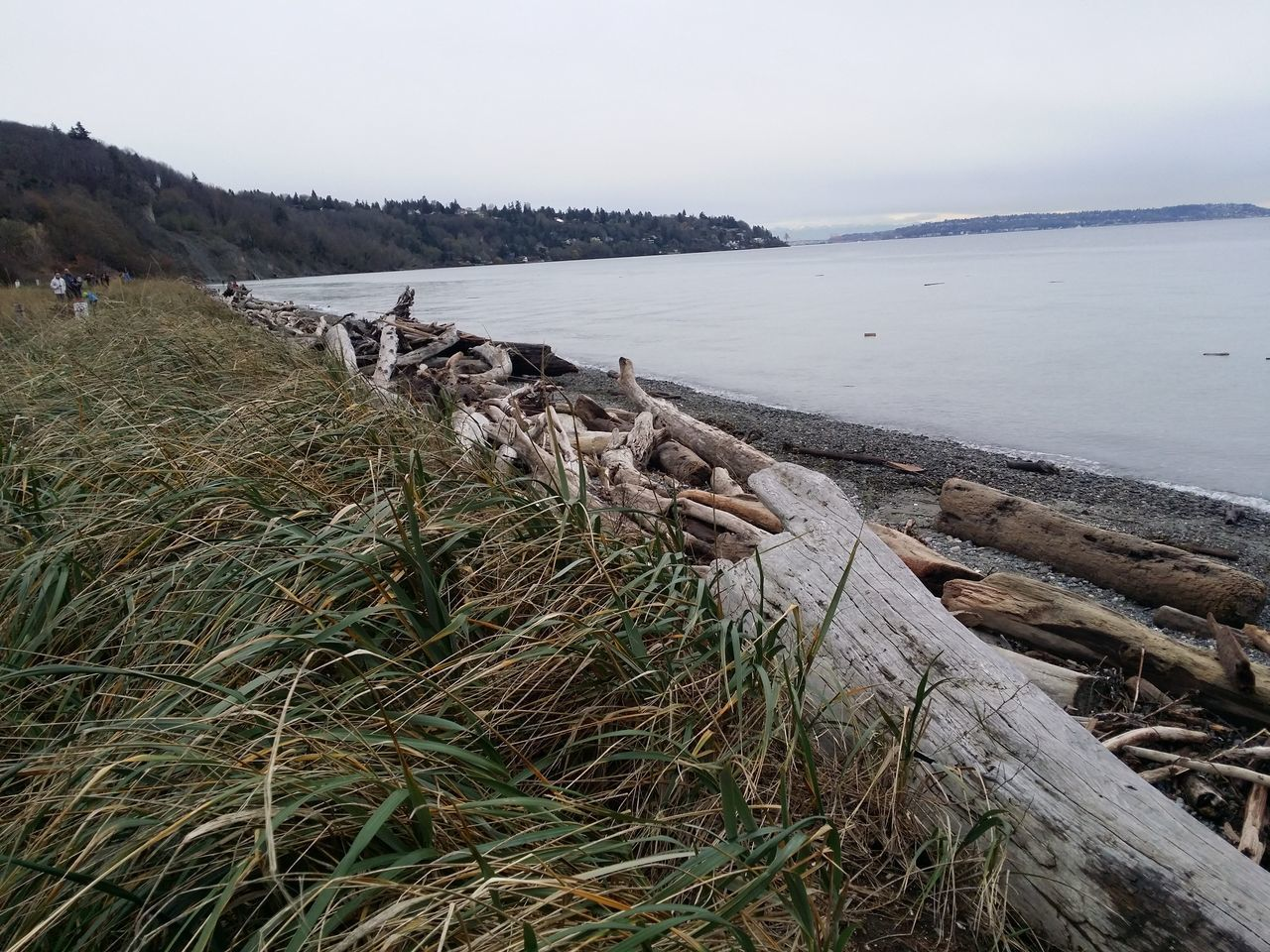 Oceanside Ocean Beach Baywalk By The Bay Drift Wood On Beach Bay