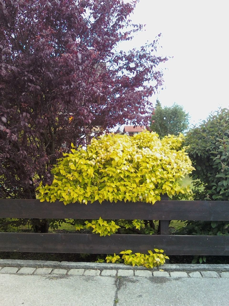 yellow, flower, tree, plant, outdoors, no people, day, growth, springtime, autumn, nature, beauty in nature, sky