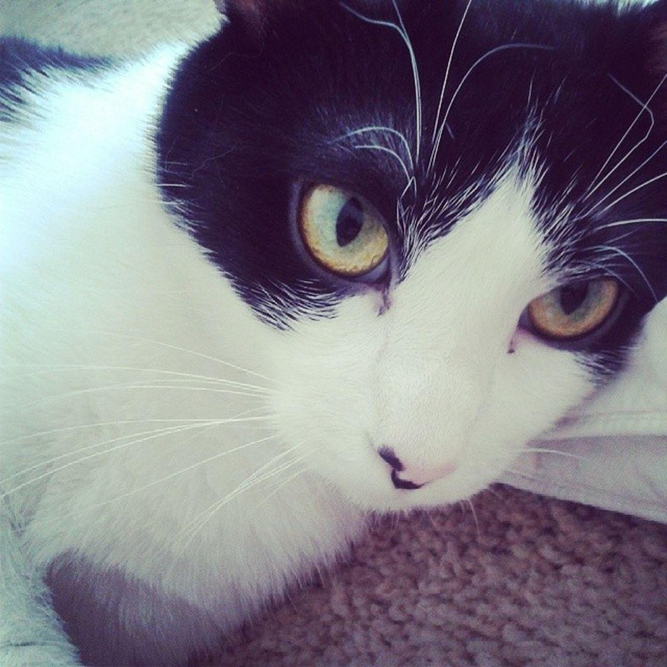 Catsofinstagram Lazycatdaze Themingming