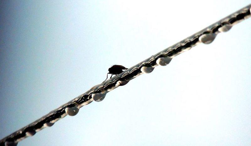 Macro Nature_perfection Raindrops Fly