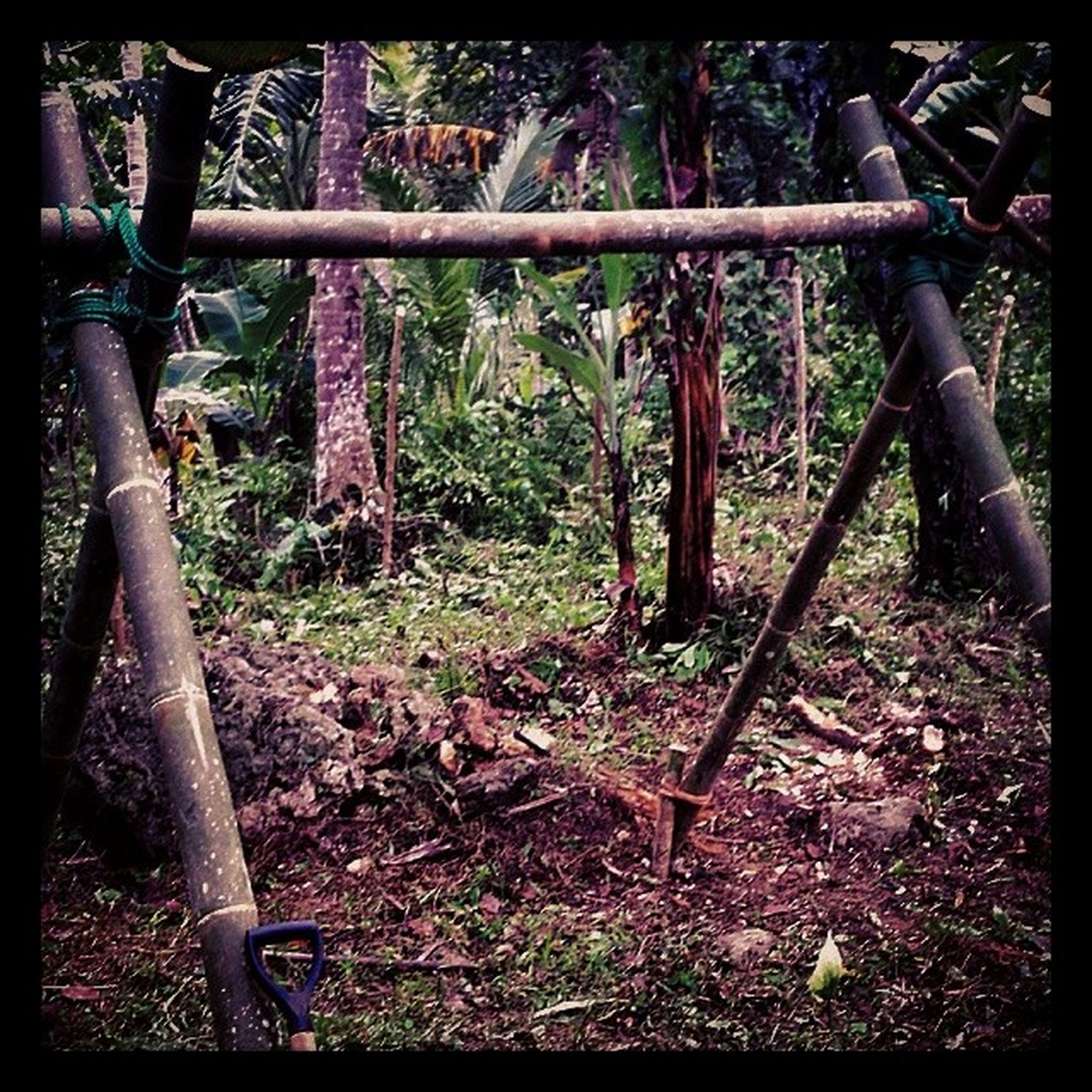 Streetfighterassassinsfist Chinupbar Bamboo Philippines Gym Akuma