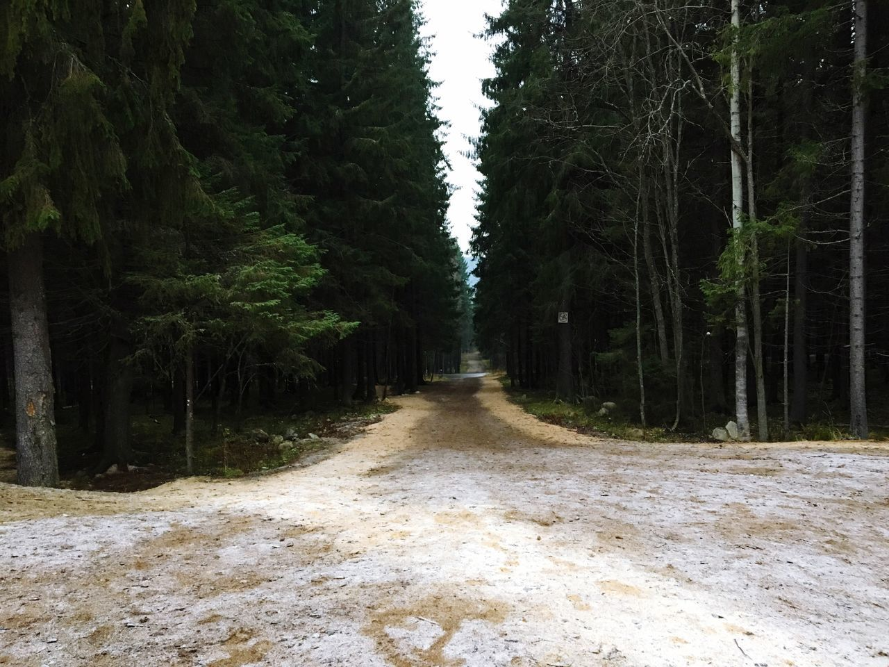 Running near the olympic base! Run Running Forest Karelia Olympic