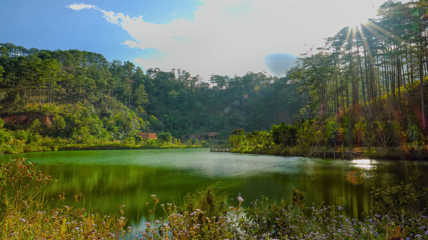 Tree Reflection Water Nature Lake Beauty In Nature Outdoors Scenics Tranquility Day Sky No People Sunlight Vacations Travel Destinations Landscape Forest Multi Colored Grass Dalat - Vietnam