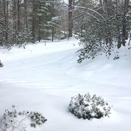 First Snowfall Hendersonville,NC Snow ❄