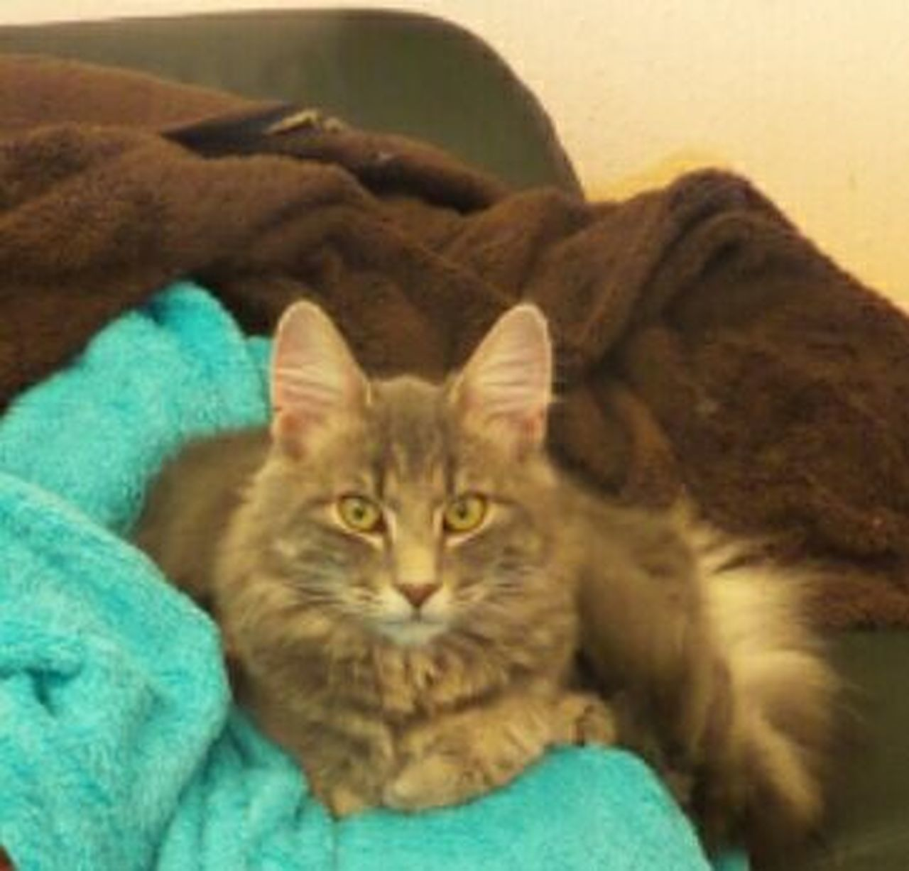 My Cat ❤ Pets Tiere Miauuu 😺