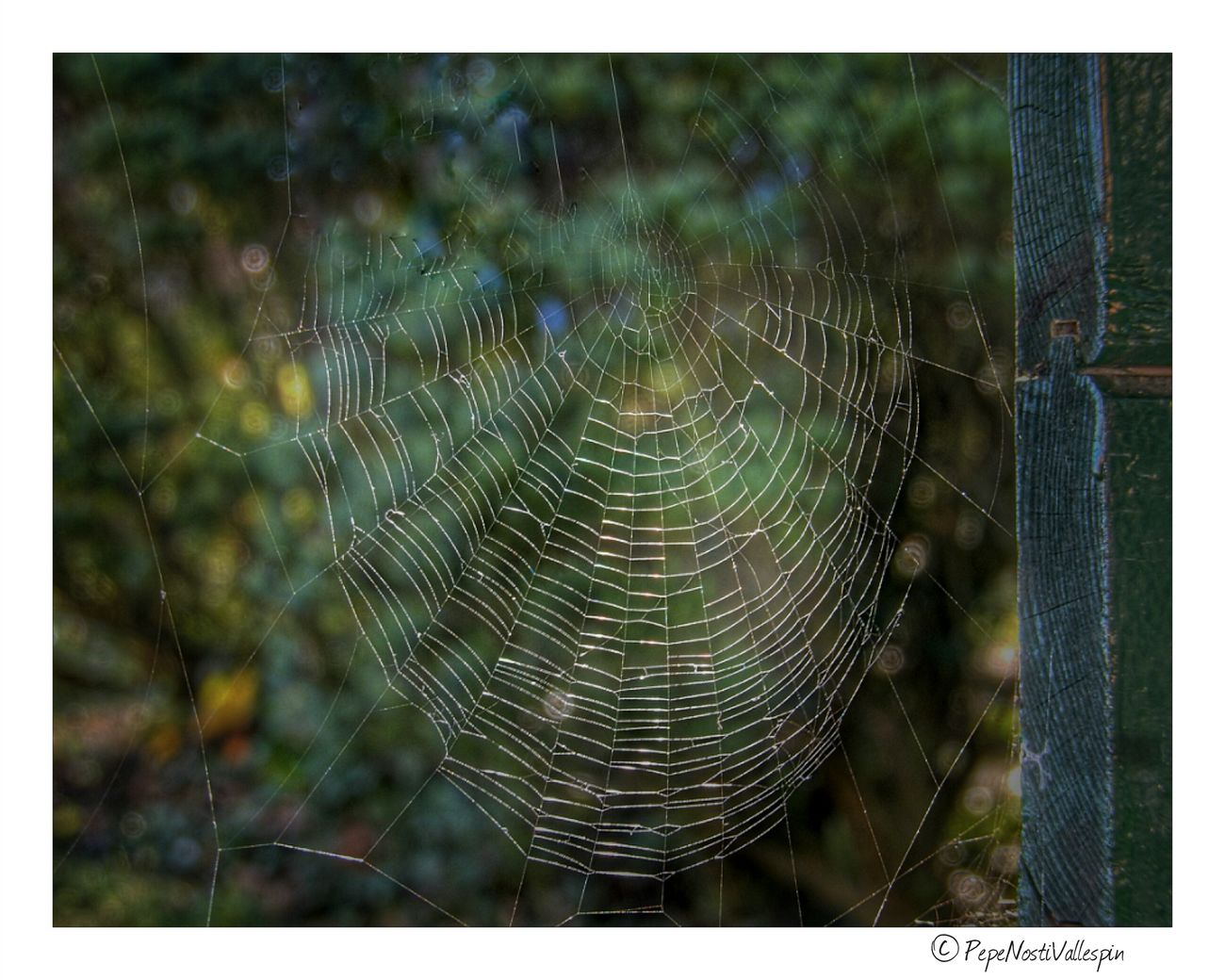 Spidersweb Naturephotography Asturiasparaisonatural