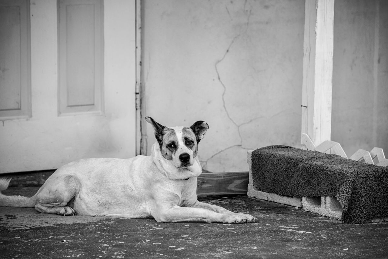 pets, domestic animals, mammal, dog, animal themes, one animal, looking at camera, relaxation, lying down, portrait, no people, indoors, day, sitting, architecture