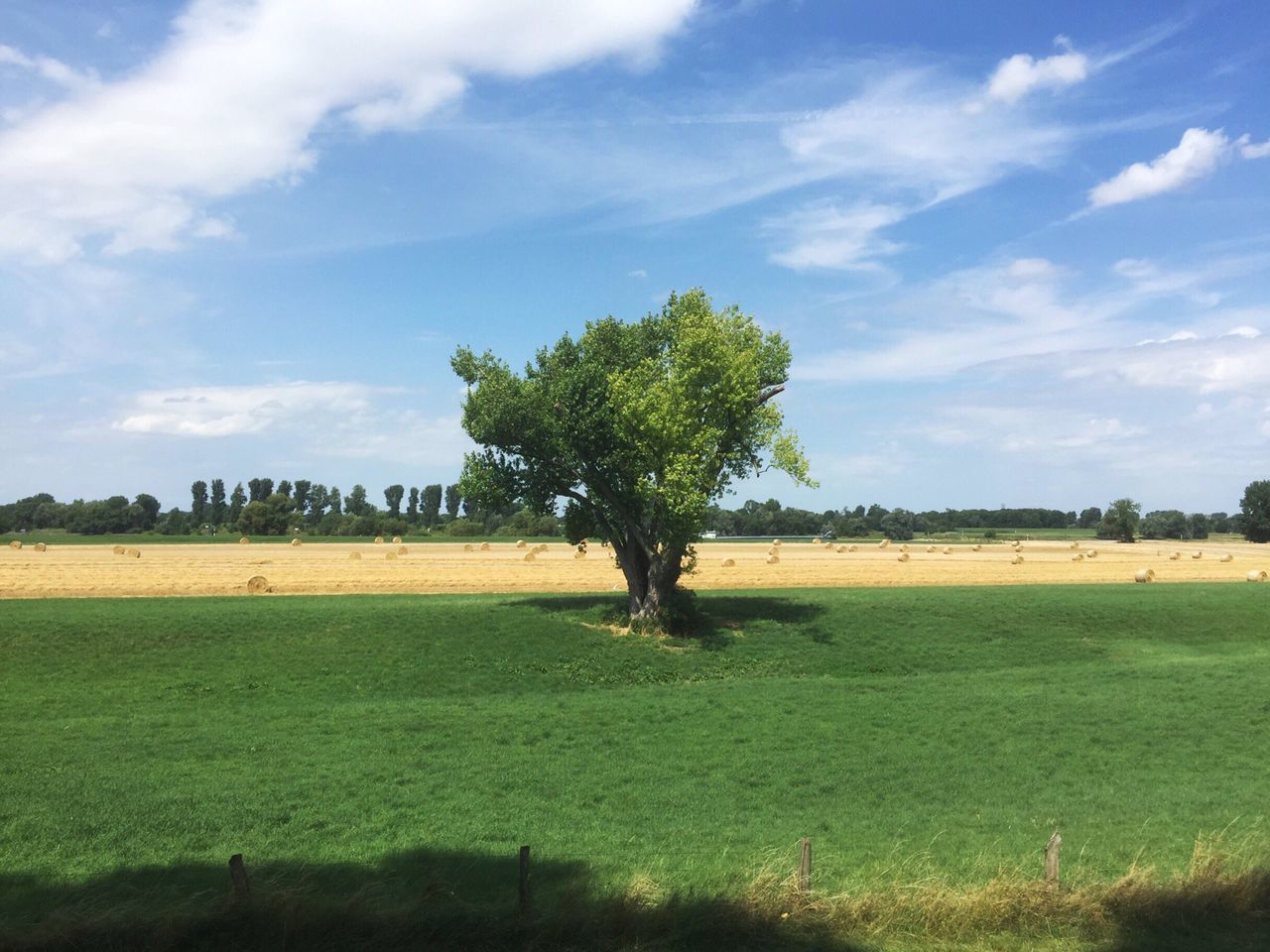 Tree Landscape Beauty In Nature Field Tranquil Scene Nature Tranquility Scenics Sky Grass Growth Cloud - Sky Day No People Green Color Agriculture Sunlight Rural Scene Outdoors