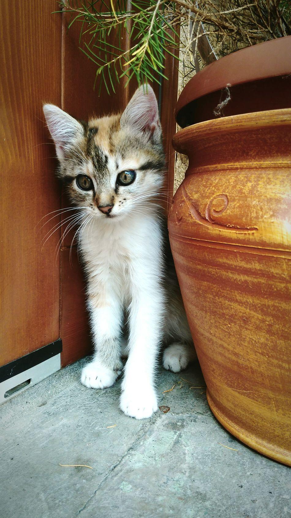 Mycat Littlecat  Flower Flowerpot Animal Themes Animal_collection Animal Photography Animal Cat & Dog