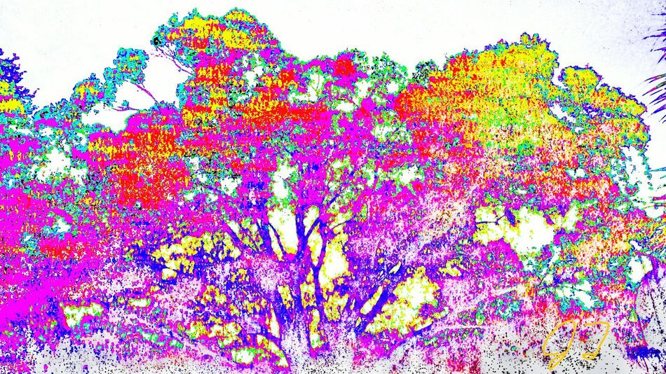 """Color Tree 2"" The Innovator The Innovator Bright Magic Artphotography Art Photography Effect Multi Colored Multicolored Colors Color Colorful ManyColors Surreal Computer Art Electronic Art"