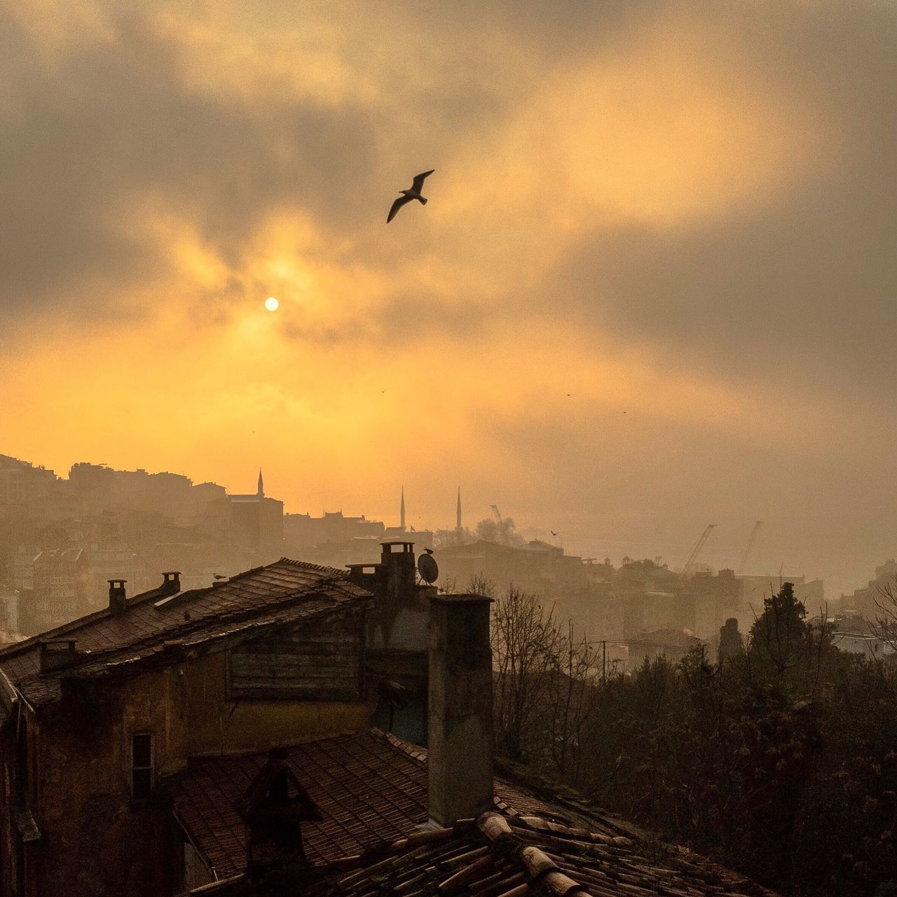 """""""You're the light of my compass, so that i could be compassionate"""" Flying Built Structure Bird Nature Day Sunrise Istanbul IPhoneography Eye4photography  EyeEm Gallery EyeEm Nature Lover Sun Silhouette"""
