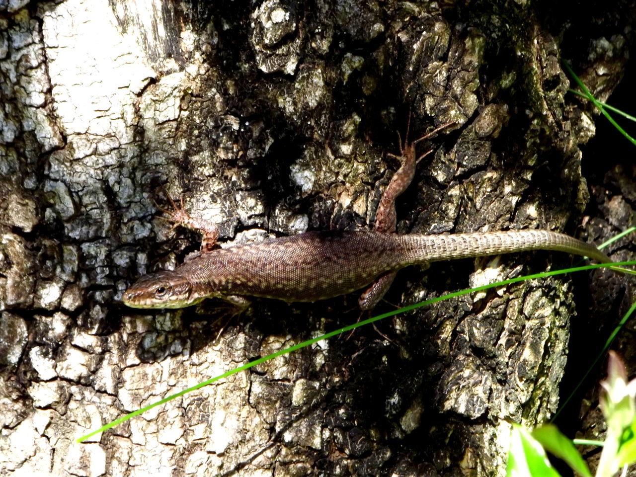 one animal, animal themes, animals in the wild, nature, animal wildlife, wildlife, no people, day, reptile, outdoors, close-up, tree, tree trunk, slug, branch