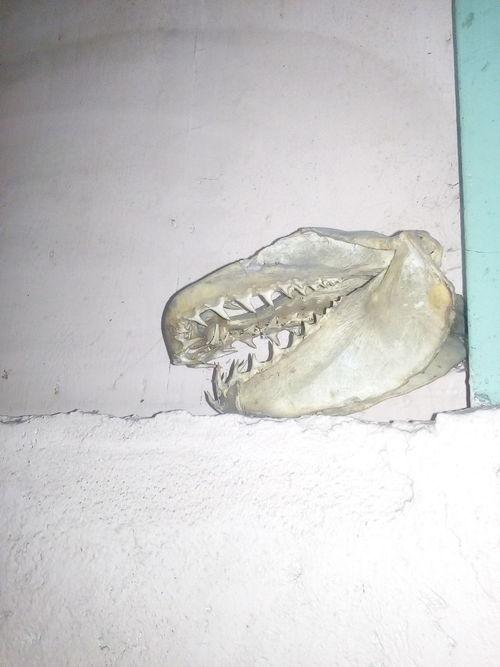 C'est pas un dinosaure. Fossil Animal Wildlife Animal Themes Sea Life