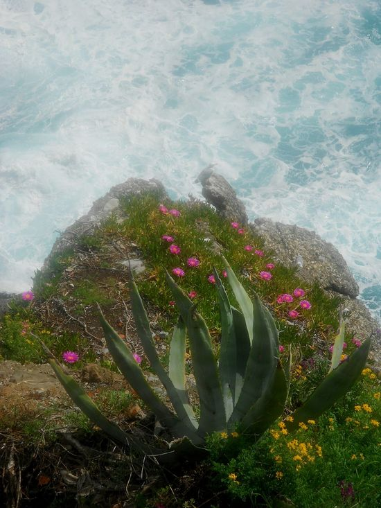 Close-up No People Freshness Nature Water Beauty In Nature Day Outdoors Portofino Italy Natural Textures Rocks And Water Mediterranean Sea Mediterranean Flowers Full Bloom Flowered Tranquility Seagull Low Section