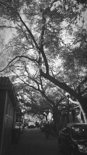 Street 喜欢老胡同,每次穿胡同儿时回忆就历历在目❤