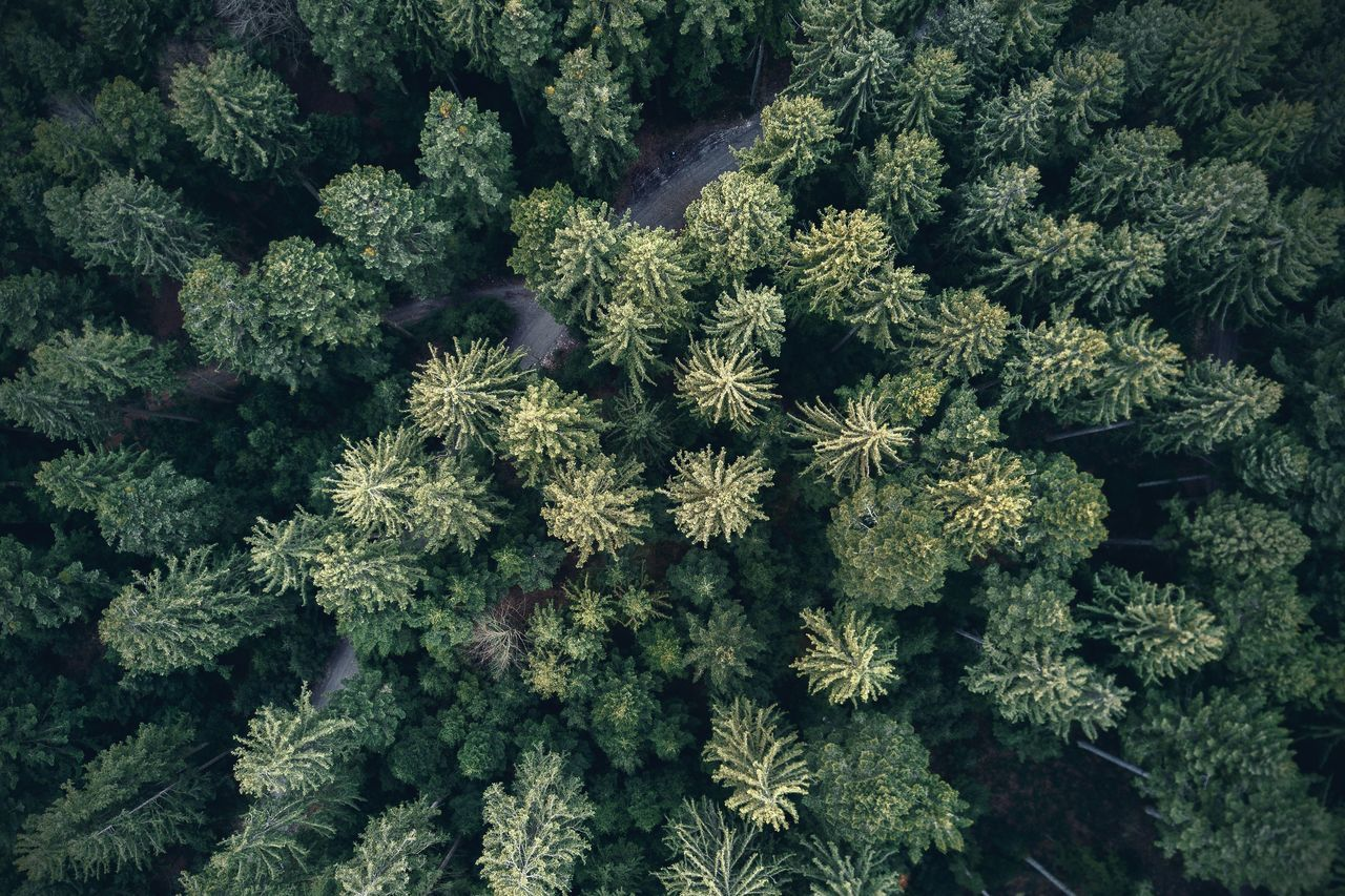 Beauty In Nature Dronephotography Forest Green Color Nature Outdoors Structure Tree Woods Flying High