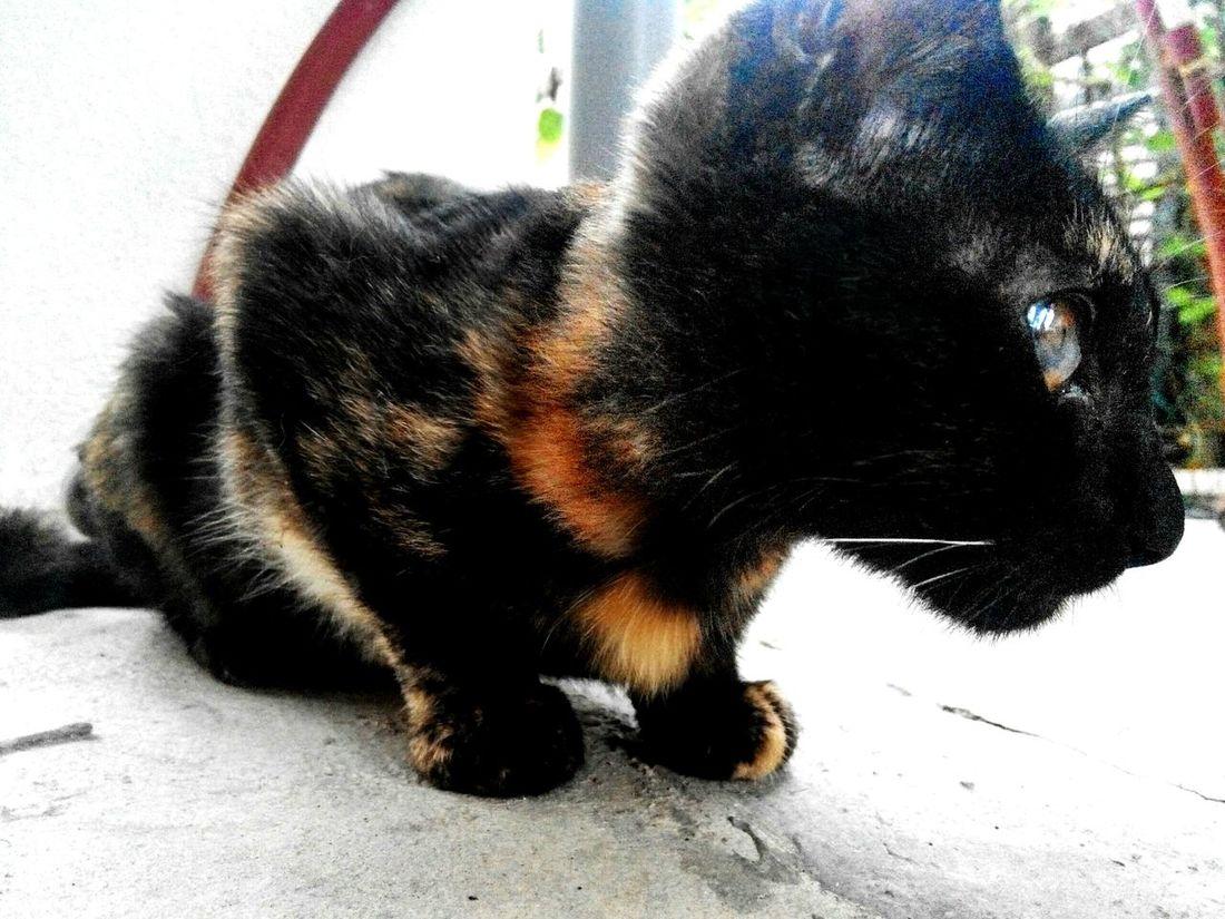 OpenEdit Showcase:November Cat Nature Photography
