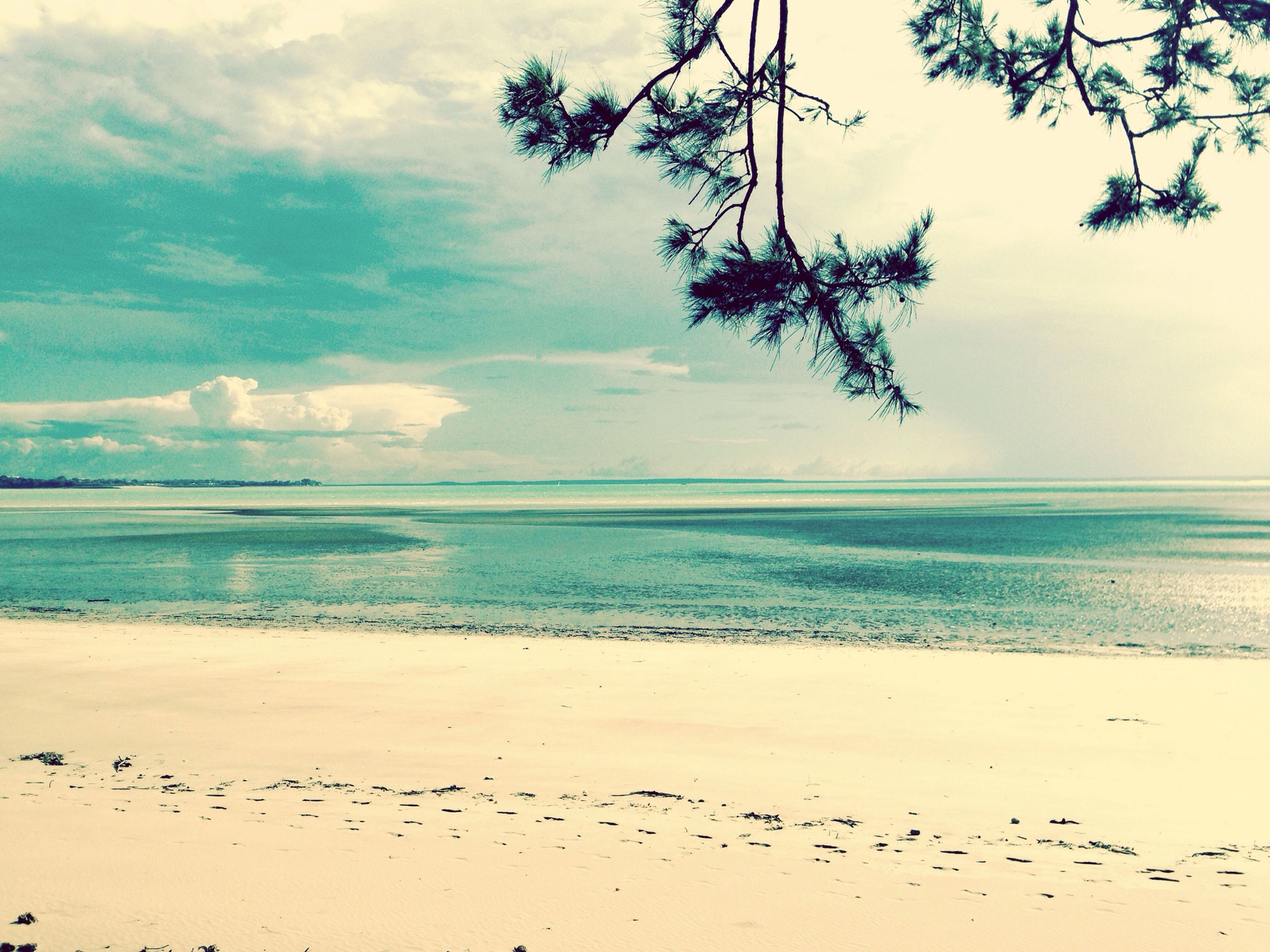 water, sky, tranquil scene, bird, tranquility, scenics, beauty in nature, horizon over water, sea, nature, tree, animals in the wild, animal themes, beach, wildlife, cloud - sky, idyllic, branch, outdoors