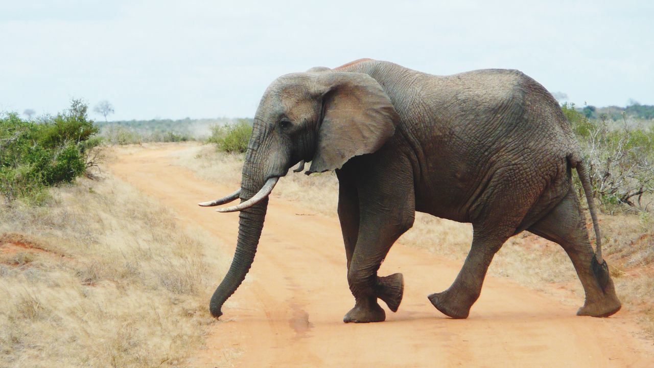 Beautiful stock photos of elephant, Animal Themes, Animal Wildlife, Animals In The Wild, Day